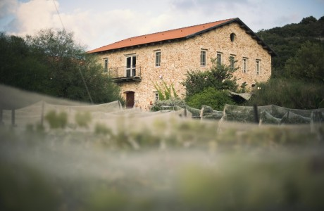wine garden. ייקב אמפורה